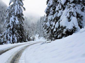 Umgestürzter Baum aufgrund Schneelast
