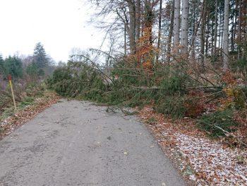 Umgestürzter Baum Richtung Holzmühleweiher