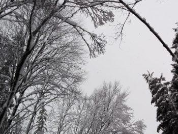 Erneuter Schneebruch